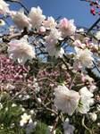 嬉しい春.jpg